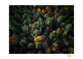 Forest Landscape - Aerial Photography