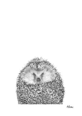Black and White Hedgehog