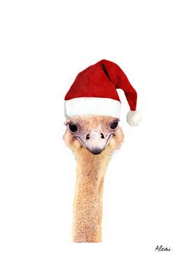 Ostrich Christmas