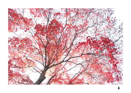 Red Autumnal leaves pattern autumn