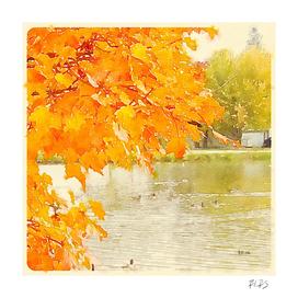 Autumn Leaves Around the Pond