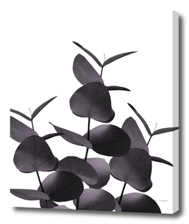 Eucalyptus Leaves Black White #1 #foliage #decor #art