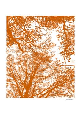 Tangerine Trees Silhouettes