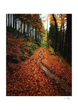 Autumn in Devils Glen, Wicklow, Ireland