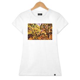 Autumn or Fall Leaves