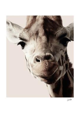 Giraffe-Vintage
