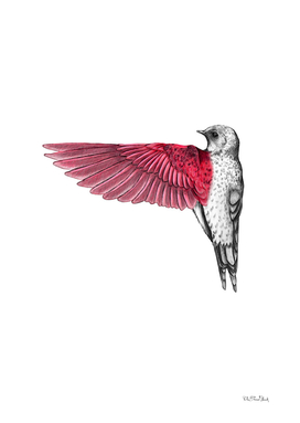 Red Bird Drawing