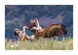 Karate Vulture