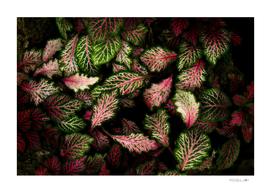 Vivid leaves
