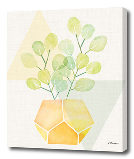 House Plant on Geometric Abstract
