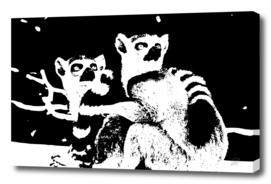 Lemur buddies