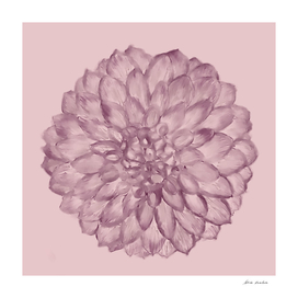A Flower on pale dusty rose