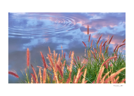 Fountain grass flower and ripples in the lake