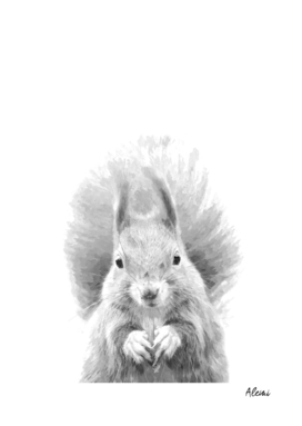 Black and White Squirrel