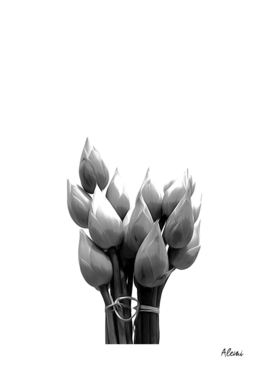 Black and White Lotus Buds