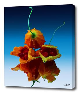 Crease Fruit Reflection