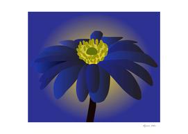 Anemone Blanda Flower Art