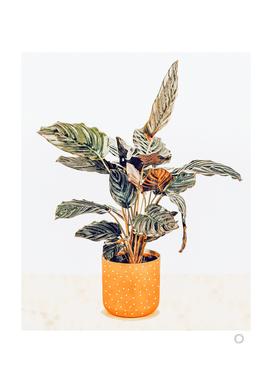 Botany II