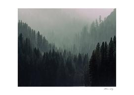 Serenity in Solitude