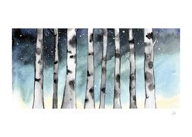 Birch Shadows In Winter Series 4