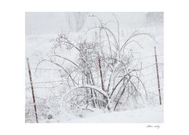 A Delicate Snowfall