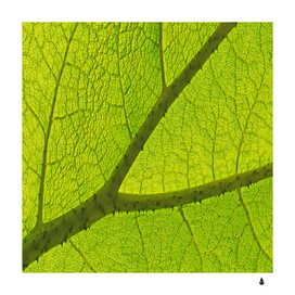 Green leaf-plant nature structure