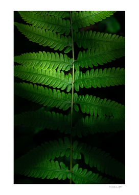 Green leaves in light and darkness