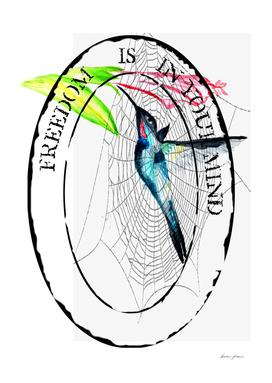 Colibri spider