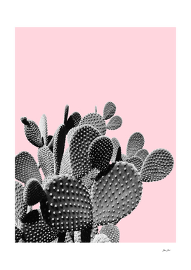 Bunny Ears Cactus on Pastel Pink