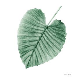 Love Leaves Evergreen - Her #1 #decor #art
