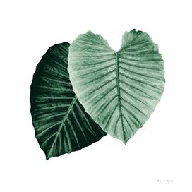 Love Leaves Evergreen - Him & Her #2 #decor #art