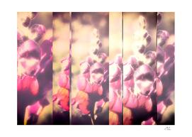 Lupine Fuchsia Collage