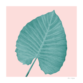 Love Leaves Evergreen Blush - Him #3 #decor #art