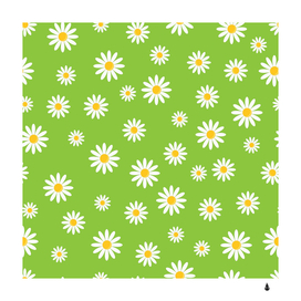 Daisy flowers floral wallpaper