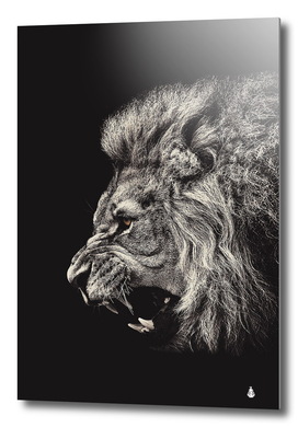 Angry male lion
