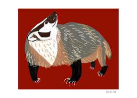 Western American Badger