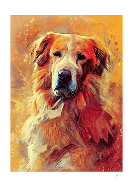 Golden Retriever dog #retriever #animals