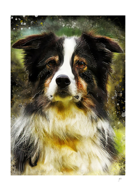 Border Collie dog #dog #collie
