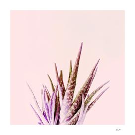 Duotone Aloe Vera on pastel Coral
