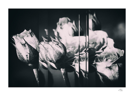 Collage of Pile of Roses in B&W