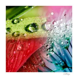 Nature's Rainfall