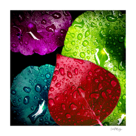 Colorful Leaves & Water Drops Abstract
