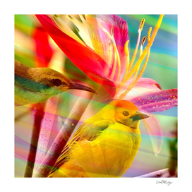Colorful Bird & Flower Collage