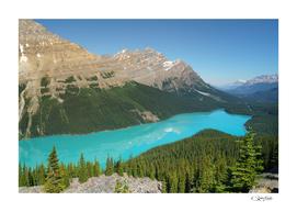 Summer in Peyto Lake, the Fox Lake. Banff National Park.