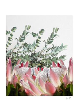 Eucalyptus & Protea