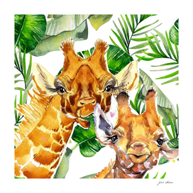Custom Giraffes With Jungle Background