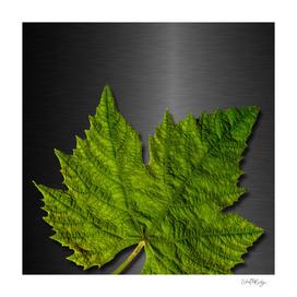 Green Leaf & Metallic Background