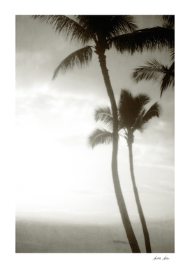 Peaceful Palms