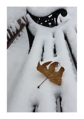 oak leaf on new snow