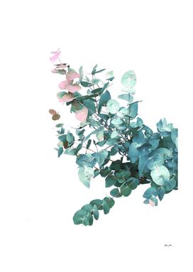 Rose and Teal Eucalyptus Foliage